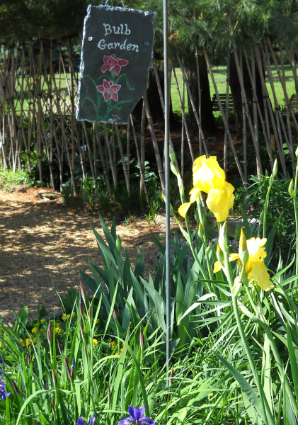 Bulb Sign With Iris
