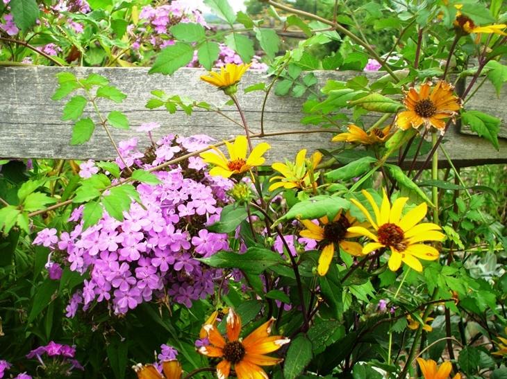 childrens-wildflowers-sm
