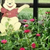 pooh-and-zinnias-092209
