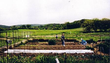 1995 Veggie Area