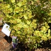 drought-woodspurge-0511-sm