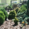 evergreen-0608sm