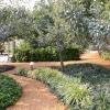 path-thru-fruit-trees