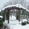 cedar_snow