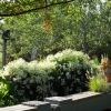 Garden view with clematis