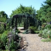 Garden view toward cedar arbor