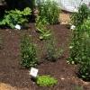 med-herbs-0611
