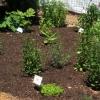 med-herbs-0611_0