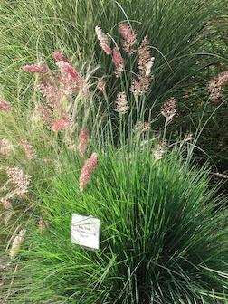 grass4-sept-08