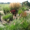 grass1-july-08