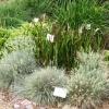 grassbed060109sm