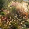 grassbed3-oct-08