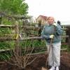 Fringe Tree Planting