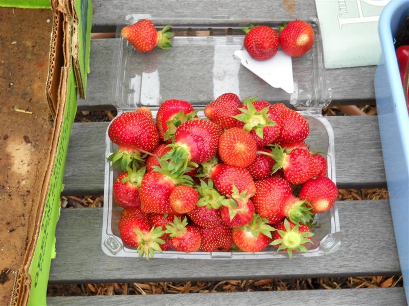 strawberries-051310