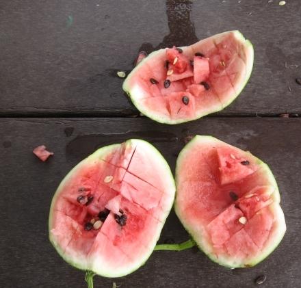 watermelon-092209