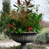 Urn planted for Winter