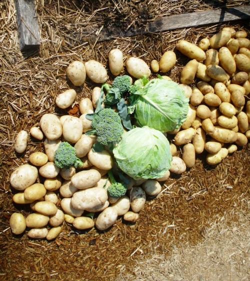 july-gardening-tips
