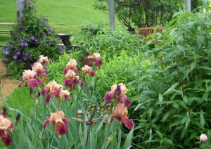 Tips for May – the first spring planting month