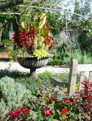 september-gardening-tips