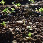 soil from pixabay